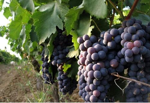 Image from www.poggiociliegio.com.