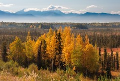Houston, Alaska (magnetic lobster) Tags: autumn trees mist mountains fall fog alaska landscape haze houston willow hdr