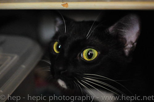tiny peers out of her hiding spot by hep