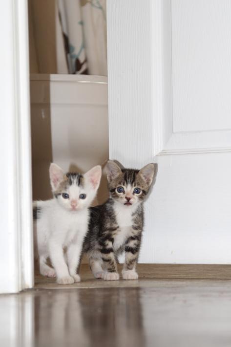 092111_kittens08