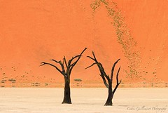 Courtship - Sossusvlei, Namibia (cedric_g) Tags: tree landscape nikon desert dune mirage pan namibia sossusvlei deadvlei accacia nikond200 visipix cedricguilleminotphotography