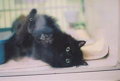 (Mountainsinthesky) Tags: road trip west cat virginia kitten heart adventure shelter stealing
