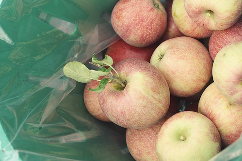apples13