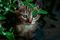 Giardino sotto casa - Oristano (_xfree_) Tags: canon eos 350d sigma gatto gatti f40 70300