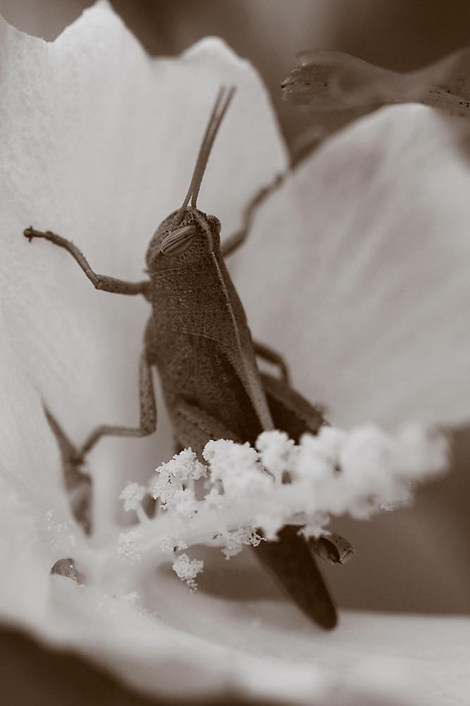 Sepia 21/30:  Flowerhopper