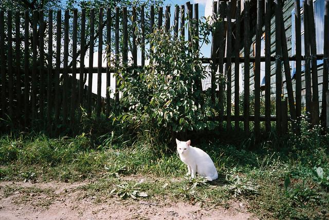 belarus_cat