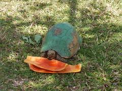 turtle eating papaya