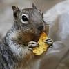 Don't feed the animals I (Solomulala | mostly weekends ;-( !) Tags: food usa animal closeup squirrel feed ardilla eekhoorn solomulala murielcdejong