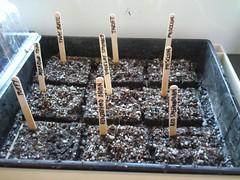 Planting 2 October