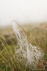 De Veluwe (Jeffrey van Houten. Mijn natuur foto) Tags: mist holland nature netherlands photography fotografie natuur veluwe canoneos1dmarkiiwithcanonef1740mmf4lusmorcanonef85mmf18usmlandscape