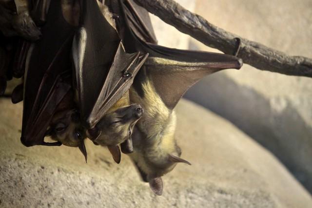 Bats and bats
