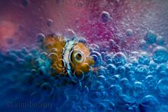 Under the Sea (sim-bolism) Tags: macro canon foam photo5