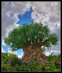 The Tree Of Life - Disney's Animal Kingdom (Mr Instructor) Tags: world show life park trees usa tree its animal clouds bug carved 3d orlando nikon raw florida bracket kingdom disney be theme walt leafs tough hdr multimedia the disneys d90
