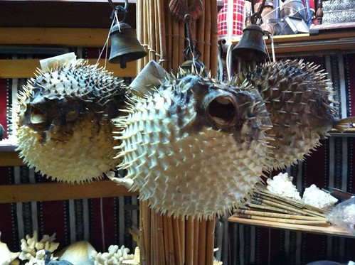 Seashell and sea creature booth / shop in Souq Waqif