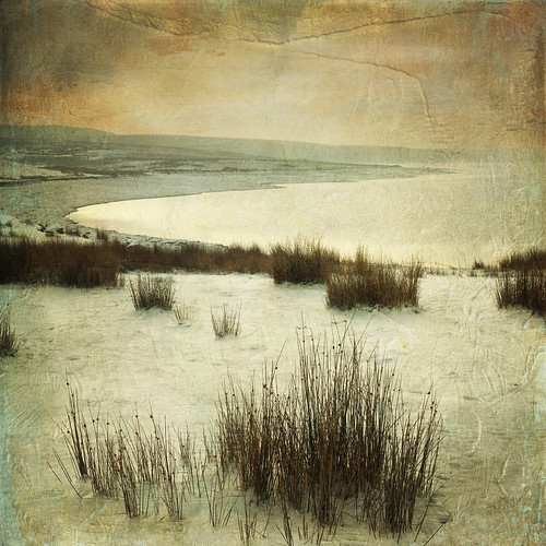 Winter 2 by Lynne Larkin