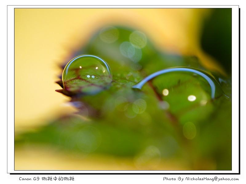 微距中的微距By Canon G9