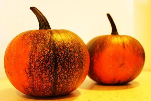 Lil Pumpkins (80)