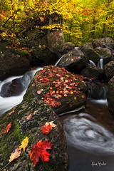 autumnal staircase ([Adam Baker]) Tags: new york autumn nature forest canon landscape flow moss hiking foliage eddy preserve slippery adirondack 1740l adambaker 5dmkii nicholsbrook