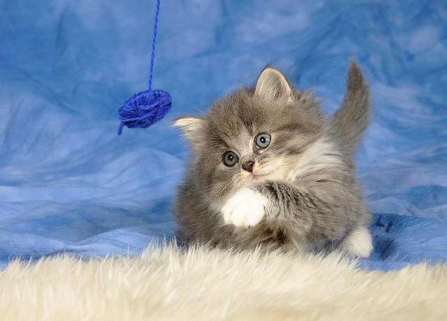 cute animal (9)