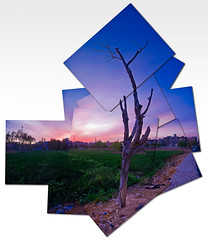 The sunset (Hani*) Tags: autumn trees sunset stilllife sun tree parts bluesky ps photomontage hockney pointshoot clearsky cwd g9 davedave hockneystyle