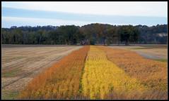 Farm Landscape (ioensis) Tags: field rural landscape october farm missouri fields option 2011 jdl ioensis 83722007067tc1c