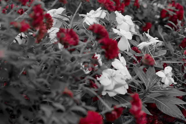 Fall Flowers-3