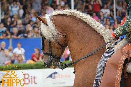 hippo enzo horse event