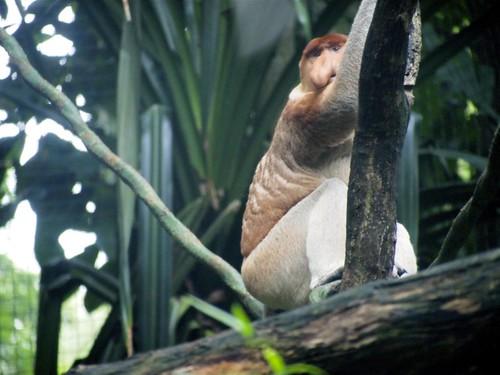 Singapore 2011 - Singapore Zoo (3)