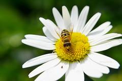 flower macro photography.