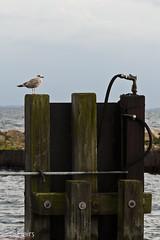 34 (LensFlairs) Tags: see meer natur hafen dnemark ostsee segeln lolland wellen brandung heiligenhafen segeltrn