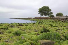 Low Tide (Erica_Marshall) Tags: ocean california ca sea seaweed green nature rock cali bay weed rocks natural tide low science algae alameda biology ecosystem barnicles barnicals alemeda