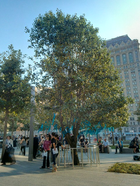 9/11 Survivor's Tree