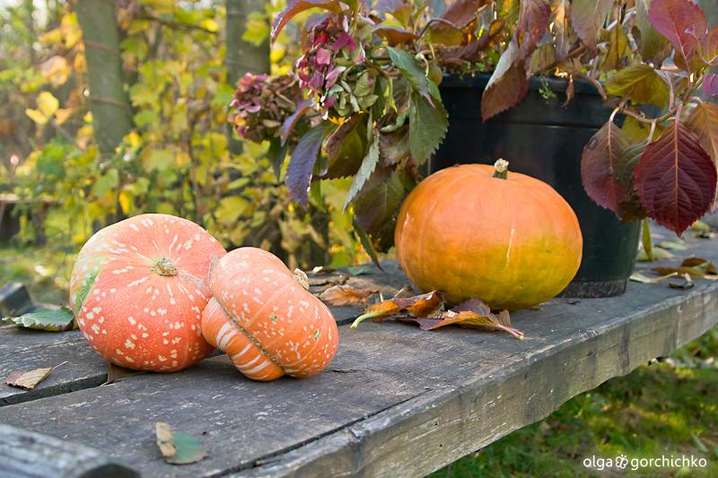 Осень Владика и Виталика