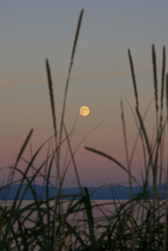 Moonrise through Sea Grass