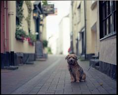 encounter ([Photom]) Tags: street light dog 120 mamiya film animal analog puppy alley dof natural kodak bokeh pov paving epson 6x7 rz67 ektar 110mm v700 sekonic l398