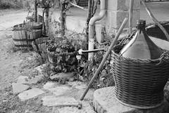 WINE AREA (skech82) Tags: wine grapes jar uva demijohn damigiana escalaplano skech82