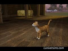 cat0011_1