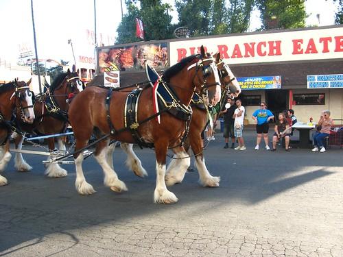 Clysdale horses Fair 01