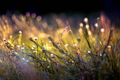 im Gras (~janne) Tags: park wedding berlin nature grass 50mm flora f14 natur pflanzen olympus gras volkspark wetzlar rehberge leitz janusz manuell summiluxr e520 ziob