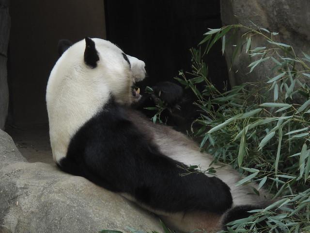 Zoo 0058