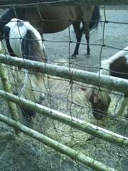 馬の柵に金網がの写真