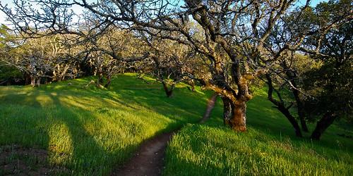 Trail Through the Oak Trees (2x1)
