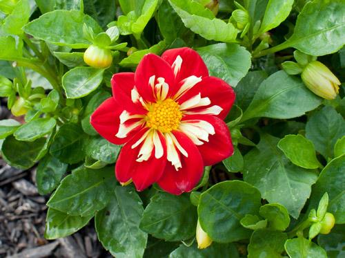 3_Fall_flower