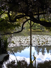 Wisteria Arbor at the Japanese Gardens