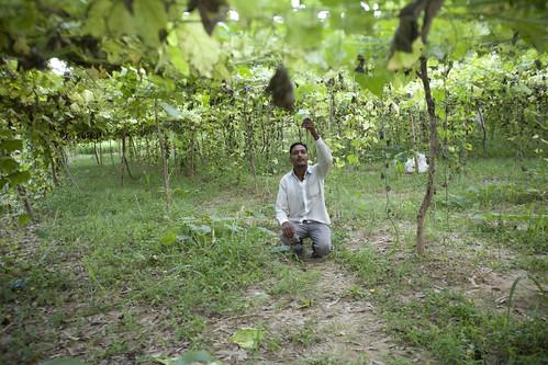 mandi_farmer_zucchini_1