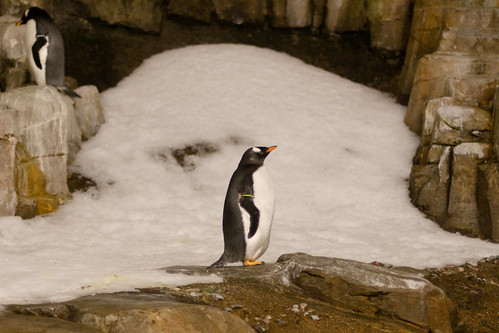 Pengiun at the Montreal Biodome by Joe Rayment-
