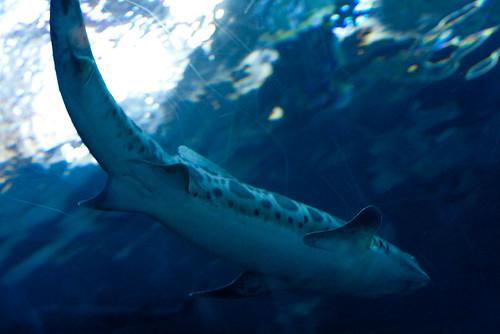 sharks1 (1 of 1)