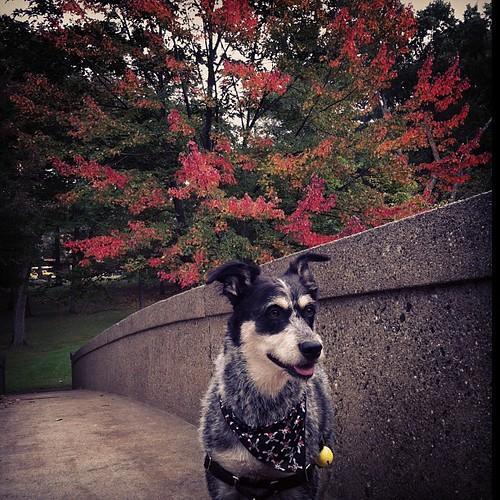 kapow #fall colors 