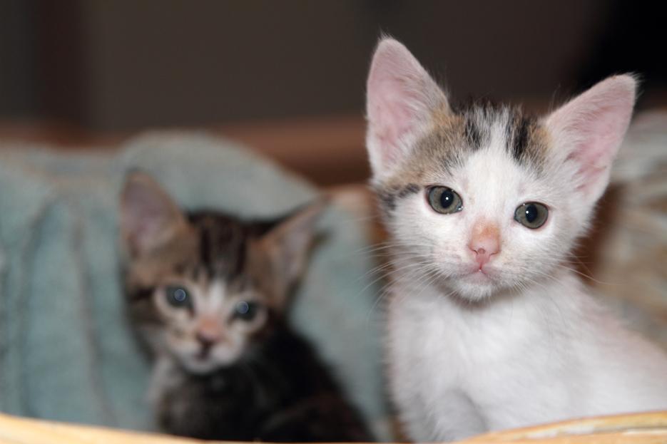 092111_kittens01