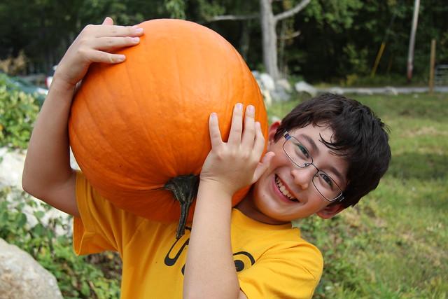 Adam's pumpkin